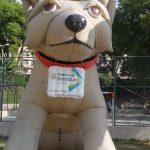 mascote inflavel cidade bebedouro cachorro