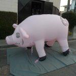 replica inflável porco