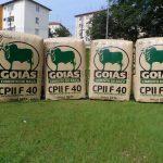 replica inflável Goiás cimento de raça